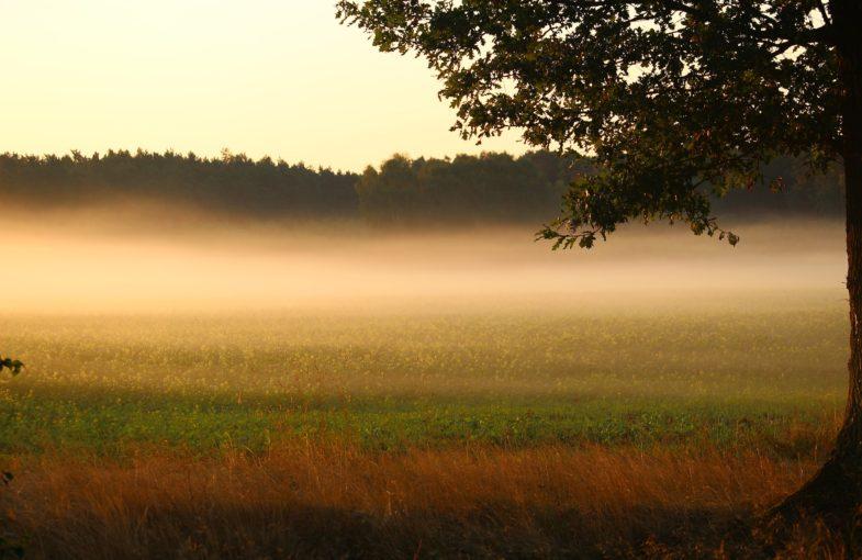 fog-1660124_1920