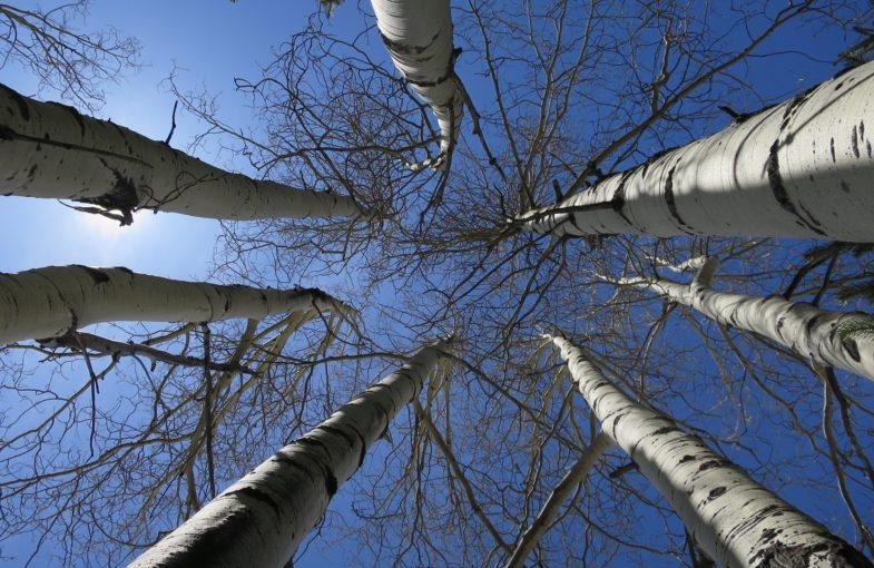 trees-1392484_1920